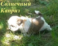 http://s4.uploads.ru/t/GqSdV.jpg