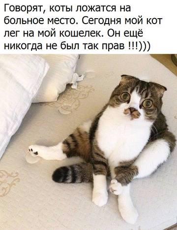 http://s4.uploads.ru/t/H2Z6J.jpg