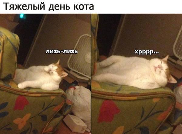 http://s4.uploads.ru/t/HngwB.jpg
