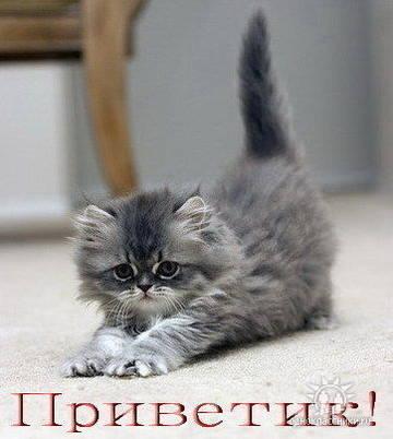 http://s4.uploads.ru/t/I0CSH.jpg