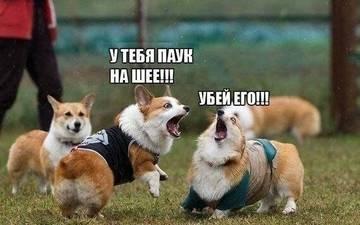 http://s4.uploads.ru/t/IcgnW.jpg