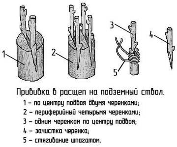 http://s4.uploads.ru/t/J1H0q.jpg