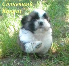 http://s4.uploads.ru/t/JYuet.jpg