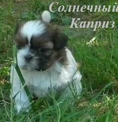 http://s4.uploads.ru/t/Kug9G.jpg