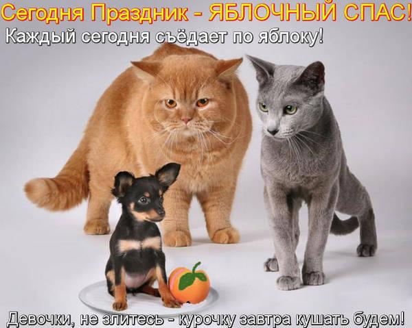 http://s4.uploads.ru/t/LPf5K.jpg