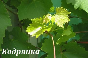 http://s4.uploads.ru/t/LScD4.jpg