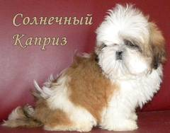 http://s4.uploads.ru/t/MsqrP.jpg