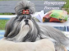 http://s4.uploads.ru/t/NJuSx.jpg