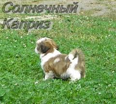 http://s4.uploads.ru/t/NUnyd.jpg