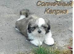http://s4.uploads.ru/t/NZmEb.jpg