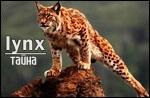 http://s4.uploads.ru/t/OV1QM.jpg