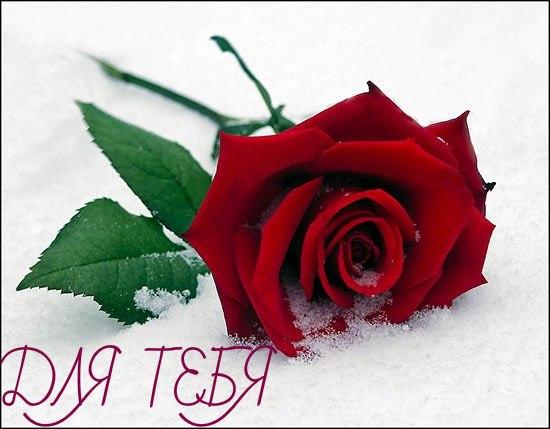 http://s4.uploads.ru/t/PFrM2.jpg