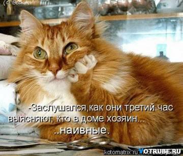 http://s4.uploads.ru/t/Qb9vq.jpg
