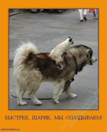http://s4.uploads.ru/t/RTKxJ.jpg