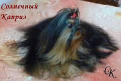 http://s4.uploads.ru/t/Rrenf.jpg