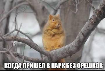 http://s4.uploads.ru/t/RyXhu.jpg