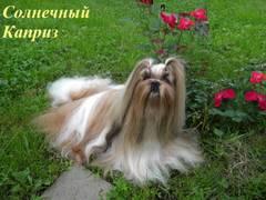 http://s4.uploads.ru/t/SQul7.jpg