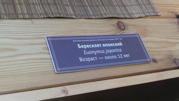 http://s4.uploads.ru/t/SnW6e.jpg