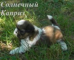 http://s4.uploads.ru/t/TOe3r.jpg