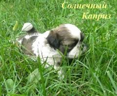 http://s4.uploads.ru/t/Tg0uC.jpg