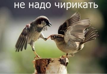 http://s4.uploads.ru/t/Uw9nS.jpg