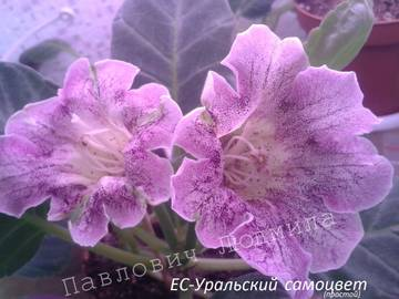 http://s4.uploads.ru/t/VJyYw.jpg