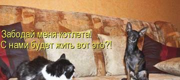 http://s4.uploads.ru/t/XFV3M.jpg