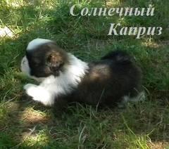 http://s4.uploads.ru/t/XuopQ.jpg