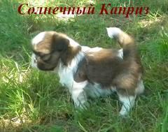 http://s4.uploads.ru/t/YioS5.jpg