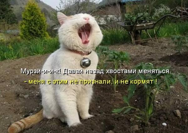 http://s4.uploads.ru/t/aorf1.jpg