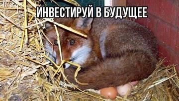 http://s4.uploads.ru/t/bmAti.jpg