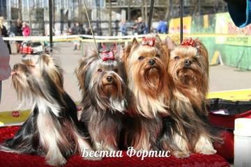 http://s4.uploads.ru/t/d3gzD.jpg