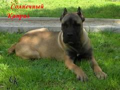 http://s4.uploads.ru/t/dwgja.jpg