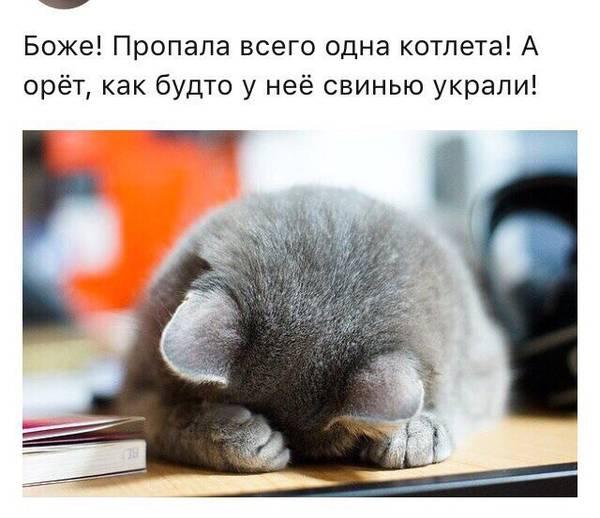 http://s4.uploads.ru/t/ftLYq.jpg