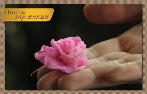 http://s4.uploads.ru/t/fvgNQ.jpg