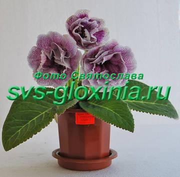 http://s4.uploads.ru/t/gOsGk.jpg