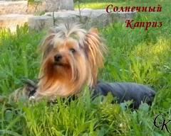 http://s4.uploads.ru/t/gQdP7.jpg