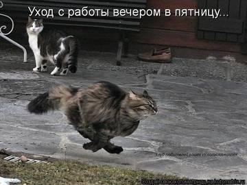 http://s4.uploads.ru/t/h0R3O.jpg