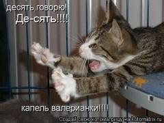 http://s4.uploads.ru/t/iDF8G.jpg