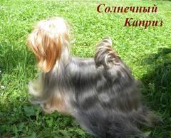 http://s4.uploads.ru/t/jOboY.jpg