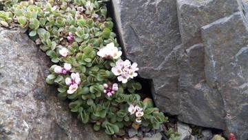 Весна идет!!! - Страница 21 Jh4Xp