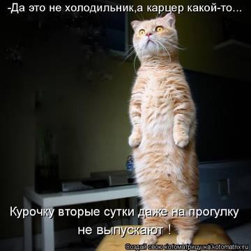 http://s4.uploads.ru/t/jrbSK.jpg