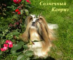 http://s4.uploads.ru/t/mHog9.jpg