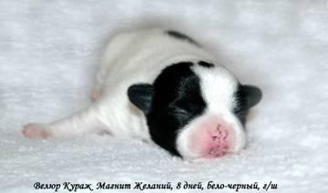 http://s4.uploads.ru/t/n3ox2.jpg