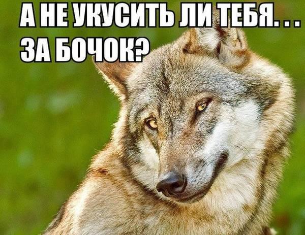 http://s4.uploads.ru/t/ndpmH.jpg