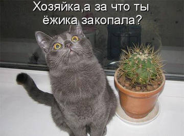 http://s4.uploads.ru/t/q3zsN.jpg