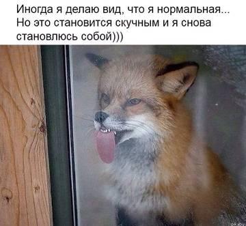 http://s4.uploads.ru/t/qNEPe.jpg