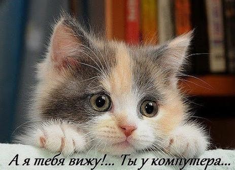 http://s4.uploads.ru/t/qOnHd.png