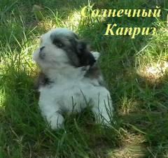 http://s4.uploads.ru/t/qYo7w.jpg