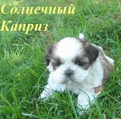 http://s4.uploads.ru/t/rT2c8.jpg
